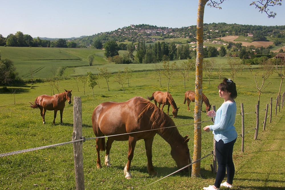 gîte Norpech chevaux